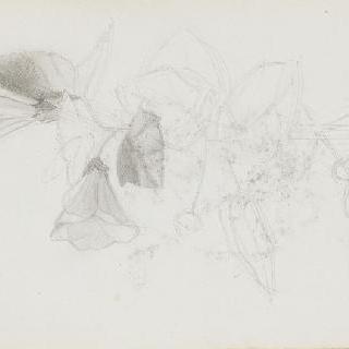 화첩 : 꽃가지