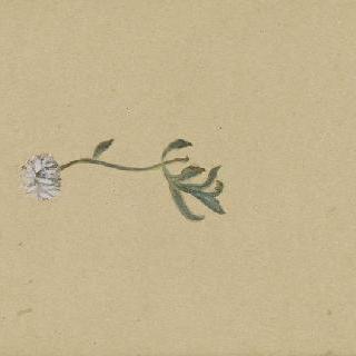 화첩 : 꽃