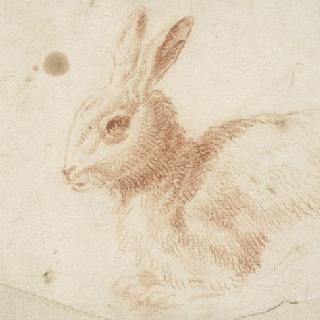 왜가리와 토끼 습작