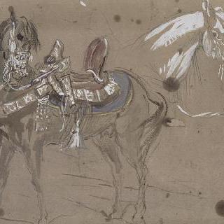왼쪽을 향한 프로필로 본 안장을 한 아랍 말 ; 말 두상