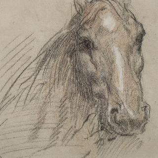 말 두상, 거의 정면에서 본 모습