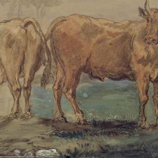 시골의 두 황소