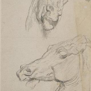 말의 두 두상
