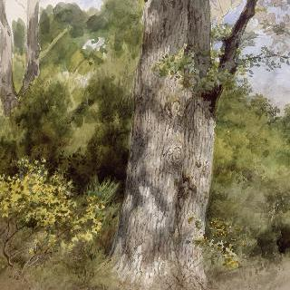 거대한 떡갈나무