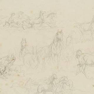 카마르그의 이삭 탈곡하는 말들의 습작
