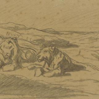 바위에 누워있는 사자와 암사자