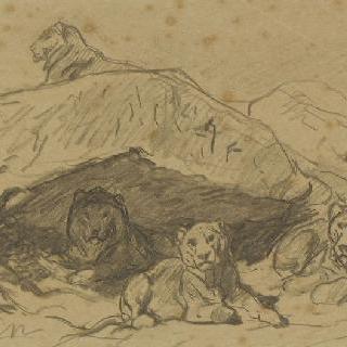 바위에 누워있는 사자 다섯 마리