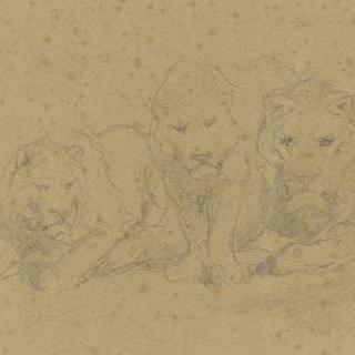 사자 네 마리와 두 마리의 암사자의 앞 모습