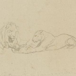 사자와 암사자 습작