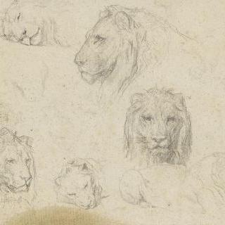 사자 머리의 습작 7 점과 누워있는 사자 크로키
