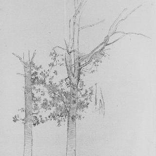 두 그루의 나무