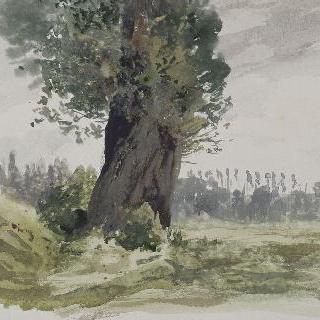 초원의 나무