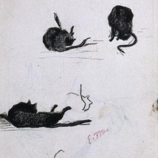 고양이의 습작 종이