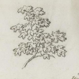 잎이 달린 나뭇가지