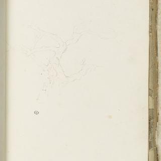 앨범 : 1775년 경의 나무 습작