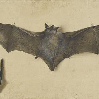 날개를 펴고 있는 박쥐. 다른 박쥐는 날개를 접고 있다