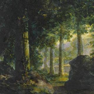 작은 숲 속