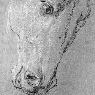 말의 머리