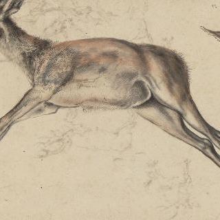죽은 암사슴, 사지가 쭉 뻗어 있다. 암사슴 머리