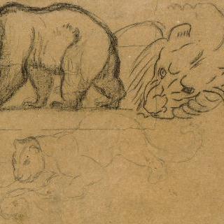 왼쪽으로 가는 곰,  사자의 머리, 동물을 쓰러뜨리는 표범