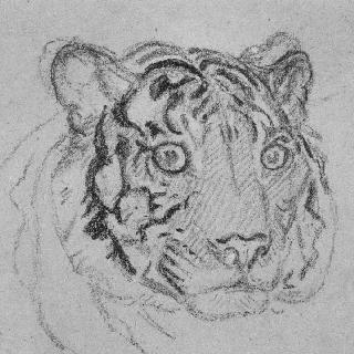 호랑이의 머리