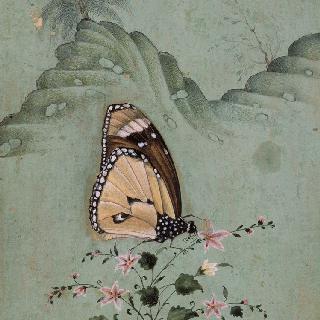 꽃 위에 앉은 나비