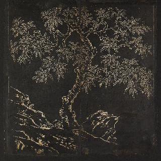 바위 틈의 나무