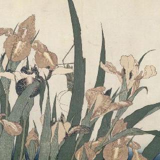 붓꽃과 메뚜기