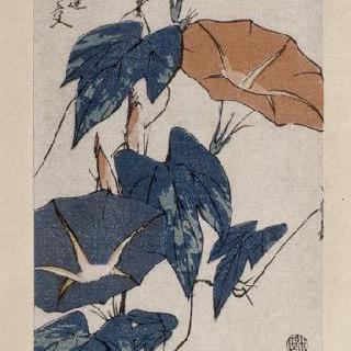 메꽃, 시리즈 : 꽃과 새