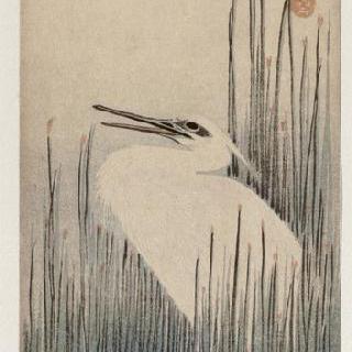 갈대 속의 흰 왜가리, 시리즈 : 꽃과 새