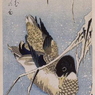 오리와 눈속의 갈대, 시리즈 : 꽃과 새