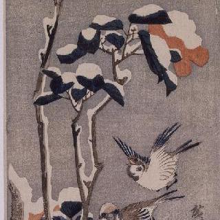 꽃과 새 시리즈 참새와 눈에 덮인 동백꽃