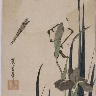 붓꽃과 흰 왜가리, 시리즈 : 꽃과 새