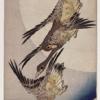 달을 배경으로 한 기러기들의 비상, 시리즈 : 꽃과 새