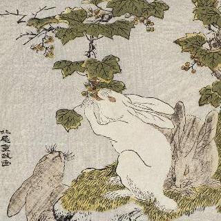 야생 포도를 먹는 세 마리 토끼