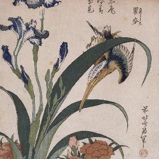 물총새, 카네이션, 붓꽃