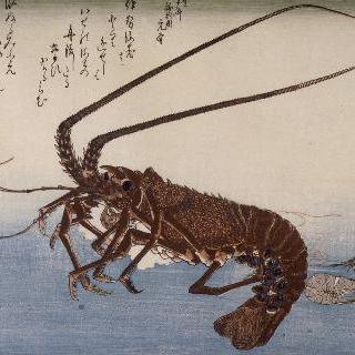 대하. 시리즈 : 큰 물고기들에 관한 두 번째 시리즈