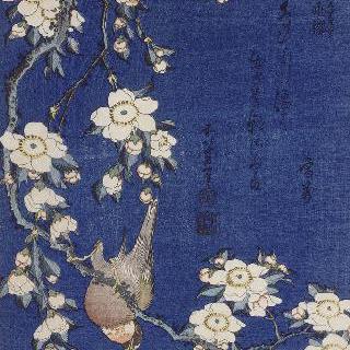 피리새와 늘어진 가지에 꽃이 만발한 벚나무