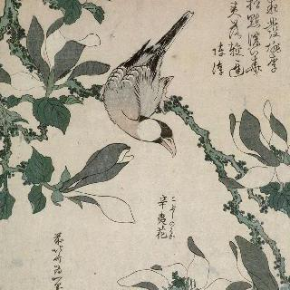 연작류 새와 목련