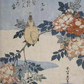 나이팅게일과 장미나무