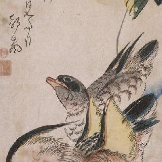 수영하고 있는 두 오리, 시리즈 : 새와 꽃