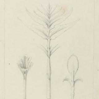 싹 습작, 서양물푸레나무, 제라늄, 수국