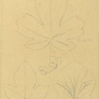 단풍나무 잎, 브리온 잎과 멜론 잎 습작