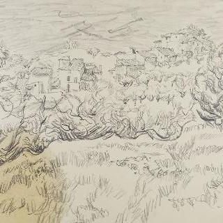 아프트 부근의 올리브나무들