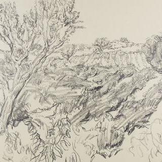포도나무와 아몬드나무들