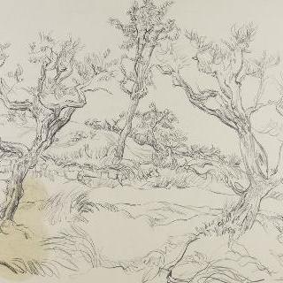 카즈뇌브의 올리브나무들