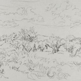 모리의 올리브나무 밭 이미지