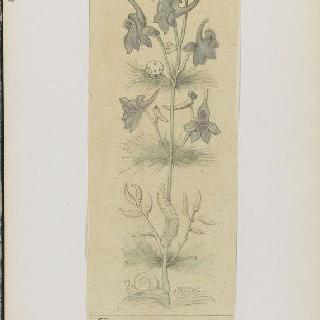 화첩 : 식물 장식