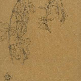 꽃 습작 2점과 푸치아잎