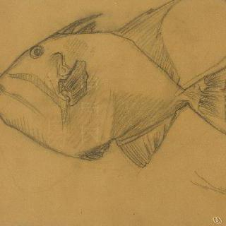 유리로 만든 물체의 물고기 습작